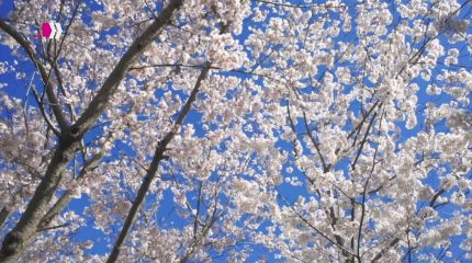 LOGLINE | Einen Brief an den Frühling
